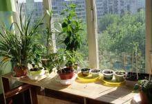 Огород на балконе - это просто