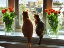 Готовим окна на весну